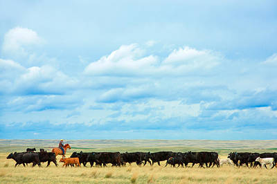 Black Angus Photograph - Bringing In The Herd by Todd Klassy