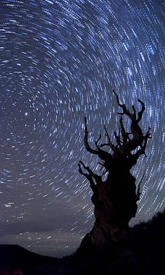 Bristlecone Star Trails Print by Cat Connor