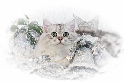 Snout Digital Art - British Longhair Cat Christmas Time II by Melanie Viola