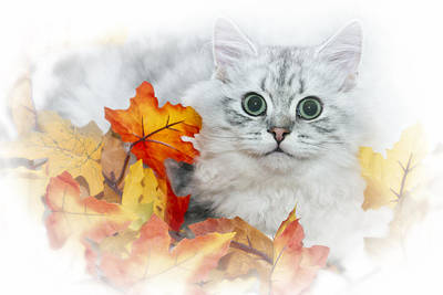 Snout Digital Art - British Longhair Cat by Melanie Viola