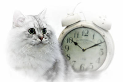 Snout Digital Art - British Longhair Cat Time Goes By II by Melanie Viola