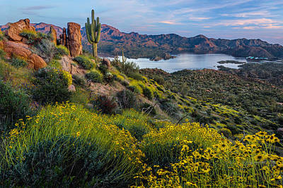 Phoenix Photograph - Brittlebush Over Bartlett by Guy Schmickle
