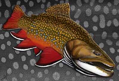 Brook Trout Drawing - Brook Trout  by Nick Laferriere