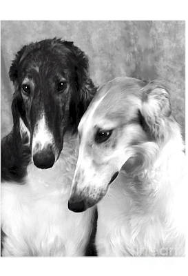 Brindle Digital Art - Brother And Sister Borzoi  by Maxine Bochnia