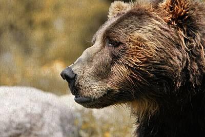 Brown Bear Golden Morning Print by Dan Sproul