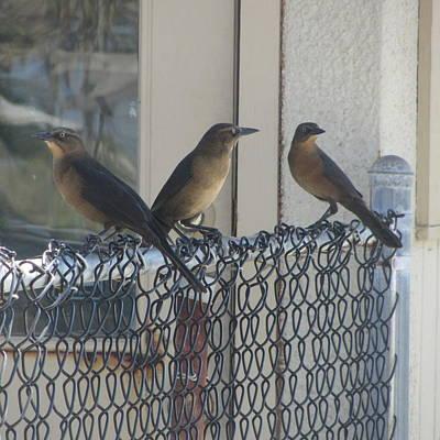 Brown Birds At Fernandina Beach Print by Cathy Lindsey