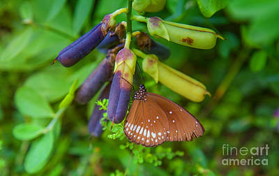 Butterfly Photograph - Brown Butterfly In The Green Jungle by Regina Koch