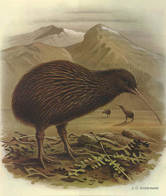 Kiwi Painting - Brown Kiwi by J G Keulemans