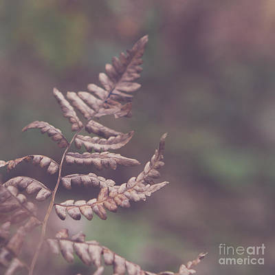 Square Photograph - Brown by Maren Misner
