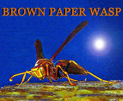 Wasp.insect Digital Art - Brown Paper Wasp Artwork by David Lee Thompson