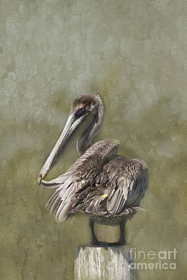 Flypaper Textures Photograph - Brown Pelican by Anne Rodkin