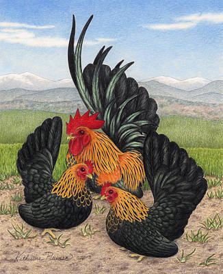 Rooster Drawing - Brown Red Japanese Bantams by Katherine Plumer