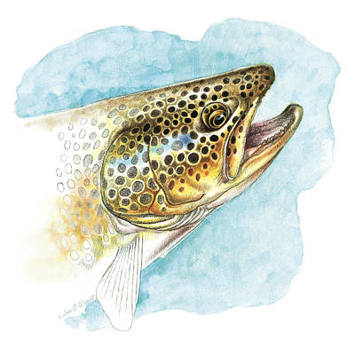 Trout Painting - Brown Trout Study by JQ Licensing