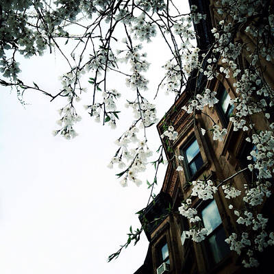 Brownstones And Blossoms Print by Natasha Marco