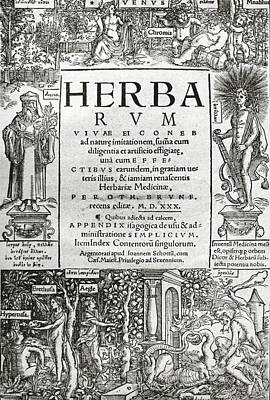 Erytheia Photograph - Brunfels's Herbarium (1530) by Science Photo Library