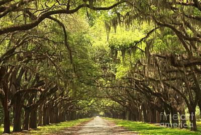 Georgia Plantation Photograph - Brunswick Avenue Of The Oaks by Adam Jewell