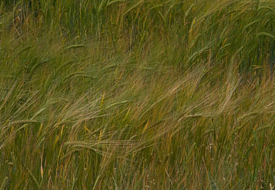 Field Of Crops Photograph - Brush Strokes by Odd Jeppesen