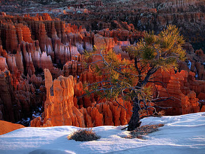 Bryce Photograph - Bryce Canyon Winter Light by Leland D Howard