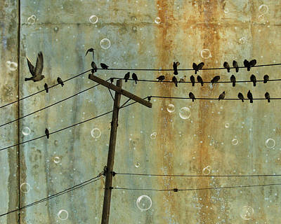 Pigeon Digital Art - Bubbly Birds by Gothicolors Donna Snyder