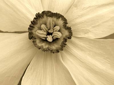 Brown Toned Art Photograph - Buckeye Daffodil  by Chris Berry