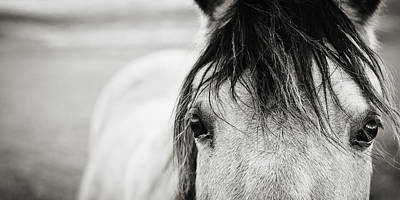 Buckskin Horse Print by Karen Broemmelsick