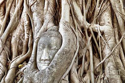 Statue Portrait Photograph - Buddha Head In Tree Wat Mahathat Ayutthaya  Thailand by Fototrav Print