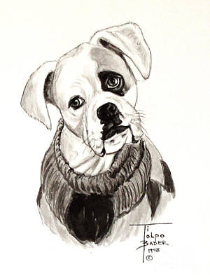 Boxer Dog Art Drawing - Buddy The Boxer by Art By - Ti   Tolpo Bader