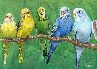 Pet Painting - Budgie Band by Cara Bevan