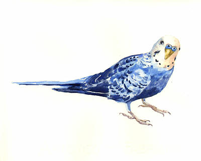 Parakeet Painting - Budgie Bow by Alison Fennell