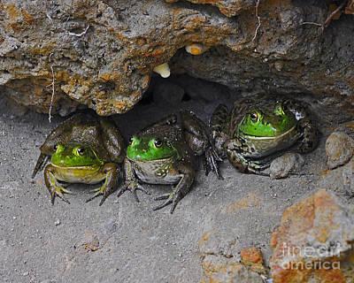 Bullfrog Photograph - Bud Bullfrogs by Al Powell Photography USA