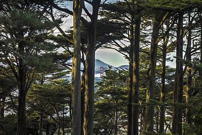 Golden Gate Photograph - Buena Vista by Jeremy Jensen
