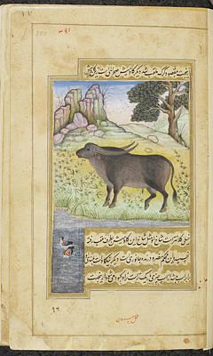 Buffalo Print by British Library