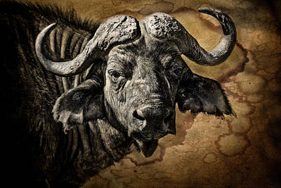 Buffalo Portrait Print by Mike Gaudaur