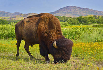 Skiphunt Photograph - Buffalo Soldier by Skip Hunt