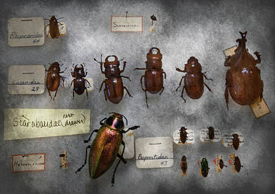 Iridescent Glass Photograph - Bug Collector - The Insect Collection  by Mike Savad