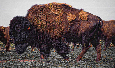 Yellowstone Mixed Media - Bull Buffalo by Daniel Hagerman