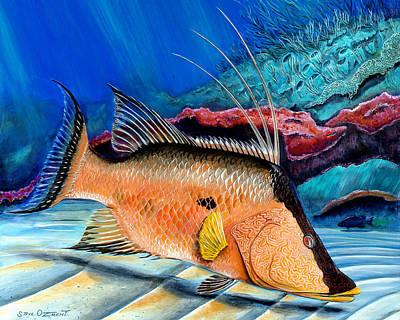 Scuba Painting - Bull Hogfish by Steve Ozment