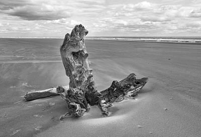 Alone Photograph - Bull Island by Marcia Colelli