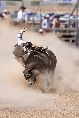 Bull Riding Print by Delphimages Photo Creations