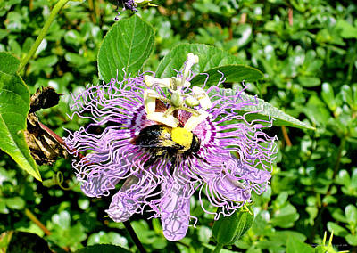 Flower Express Photograph - Bumble Bee Haven by Alice Kay H