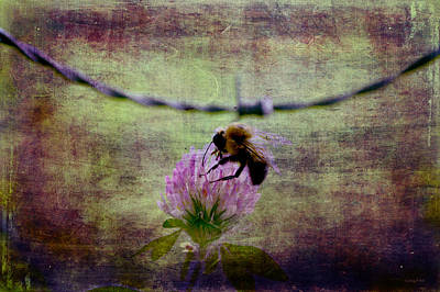 Barbed Wire Photograph - Bumble Bee  by Lesa Fine