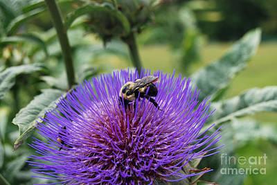 Artichoke Digital Art - Bumble Bee On Purple Artichoke Flower by Eva Kaufman
