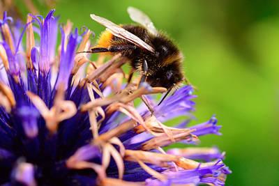 Bumblebee  Original by Toppart Sweden