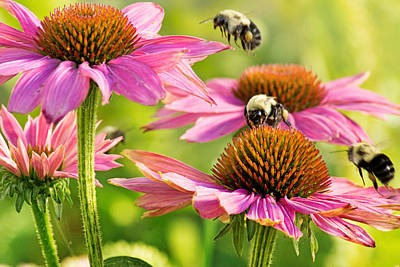 Gathering Photograph - Bumbling Bees by Bill Pevlor