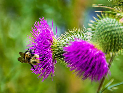 Flowers Photograph - Bumbling In The Burdock by Steve Harrington