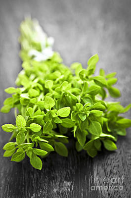 Selection Photograph - Bunch Of Fresh Oregano by Elena Elisseeva