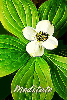 Bunchberry Blossom - Meditate Print by Bill Caldwell -        ABeautifulSky Photography