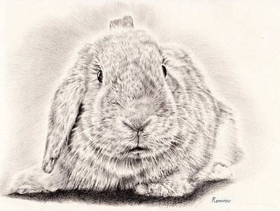 Rabbit Drawing - Bunny Portrait 1 by Remrov