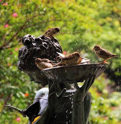 Burnett Bird Bath Print by Jessica Jenney