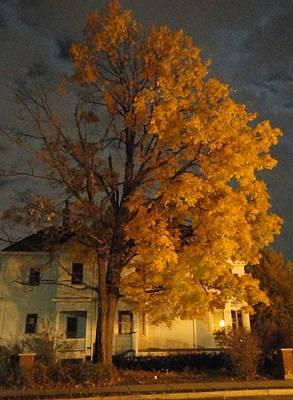 Burning Leaves At Night Print by Guy Ricketts